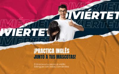 ¡Practica inglés junto a tus mascotas!  Entrena a tu perro al estilo bilingüe con estos comandos